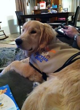 carova service dog