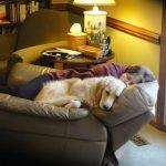 Nancy and issy snuggle buddies