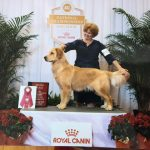 akc Theo Florida picture 2016