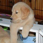puppy on plank