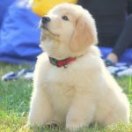 teddy pup three